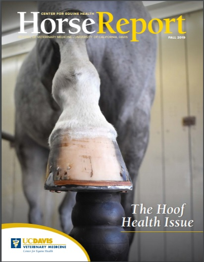 Cover image of Fall 2019 Horse Report