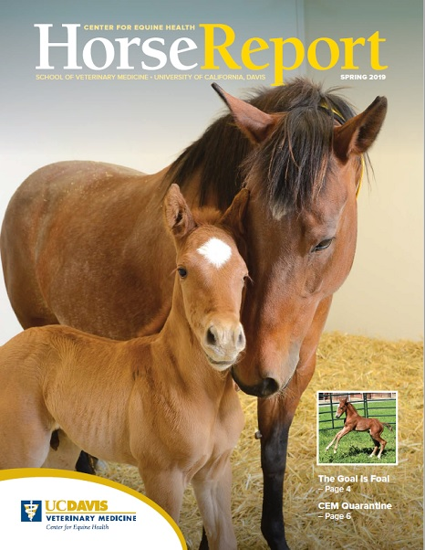 Cover image of Spring 2019 Horse Report