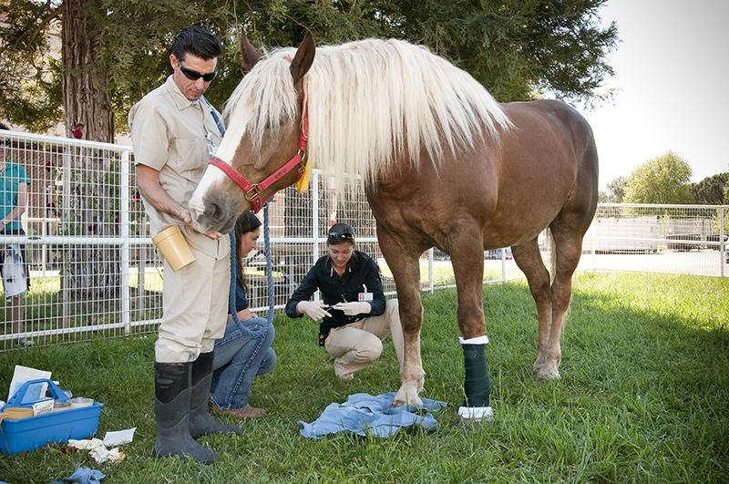 equine coronavirus prevalence