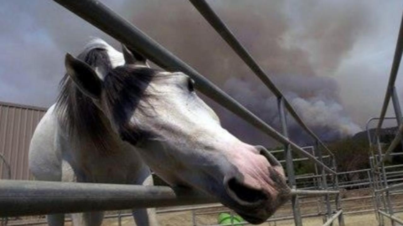 A horse in a pen with a smoke plume from a wildfire in the background