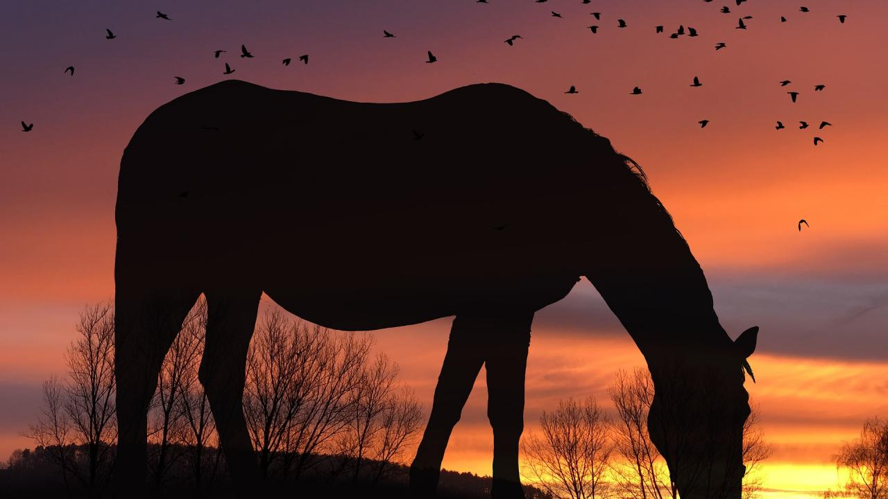 horse grazing at dusk