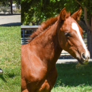 Pictures of the 2019 CEH foals