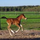 foal running in a pasture